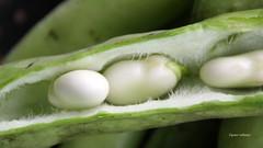 11-IMG_2591 (hemingwayfoto) Tags: bio bohne dick dickebohnen food gemse grn landwirtschaft lebensmittel markt saubohne schale vegetarisch vitamin