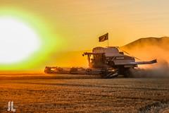 IMG_8490 (larzz4444) Tags: chester montana winterwheat chestermontana gleaner drylandfarming sweatgrasshills joplinmontana wheatharvest sunset