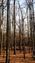 .. () Tags:           uma srbija serbia srem srbi pejza wood frukagora priroda