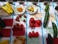Summer in England (Balticson) Tags: tomatoes courgettes cucumbers vegetables fruit summer somerset halse halsecountryfayre flowershow plantgrowingcompetition prizewinningplants prizewinningvegetables