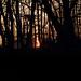 Prospect Park Sunrise