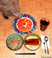 Seara (sea rabbit). Photo by Dr. Takeshi Yamada. 20120206 077 Unadon (. Grilled Eel on the bowl of Steamed Rice.) Chicken & Pork Soup. Tomato. Black Tea. (diningwithsearabbits01) Tags: startrek ny newyork sexy celebrity art hat fashion animal brooklyn painting asian coneyisland japanese star costume tv google king artist dragon god cosplay manhattan wildlife famous gothic goth performance pop taxidermy cnn tuxedo bikini tophat unitednations playboy entertainer takeshi samurai genius mermaid amc mardigras salvadordali unicorn billclinton billgates aol vangogh curiosities sideshow jeffkoons globalwarming takashimurakami pablopicasso steampunk yamada damienhirst cryptozoology freakshow barackobama seara immortalized takeshiyamada museumofworldwonders roguetaxidermy searabbit ladygaga climategate minnesotaassociationofroguetaxidermists  spockfood