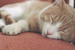 Milo (* Nicoletta Radice) Tags: italy cats animals cat portraits canon 50mm italia gato gatto gatti animale nicolettaradice