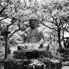 A statue of Buddha (Leiroha) Tags: bw acros100 selfdevelopment microfine rolleiflex35fplanar