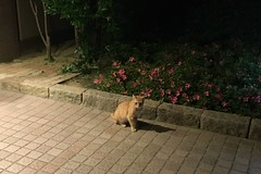 Today's Cat@2016-05-19 (masatsu) Tags: cameraphone apple cat softbank iphone catspotting thebiggestgroupwithonlycats