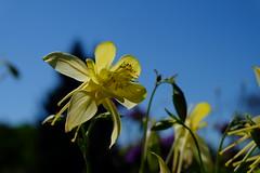 Heads up (Radu Andrei B) Tags: bulgaria botanicalgarden balchik