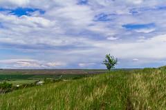 blajini natura-1912 (maritoieugeniu) Tags: flowers blue trees sky green fauna clouds landscape landscapes earth land agriculture cloudscapes moldova skyporn radeni