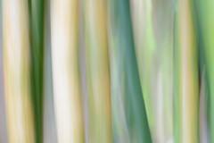 Bab (Pablo Bou) Tags: espaa naturaleza andaluca spain flora bamb mlaga barrido artstica