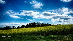 Another blue and yellow afternoon... (Jean McLane) Tags: flowers blue sky flores green nature yellow fleurs landscape suisse nopeople