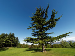 San Grato 061 (MarioVare) Tags: azaleas flowering blossoming ch rhododendrons carona azalee lagodilugano ceresio fioritura cantonticino rododendri montearbostora svizzeraswitzerland parcobotanicosangrato sangratobotanicalpark luganoturismo