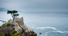 Lone Cypress Tree (Abhijit B Photos) Tags: ocean california sea tree nature landscape coast monterey outdoor scenic pacificocean shore 17miledrive minimalism lonetree cypresstree montereycalifornia lonecypresstree nikond90
