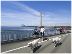 QF Dogs (The Anti-Sharpness League) Tags: jadmor olympus queensferry crossing forth road bridge dunfermline fife cable stayed