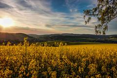 IMG_1913_4_5_fused-2 (Andr Leonhardt) Tags: trees sunset nature beauty clouds landscape deutschland abend heaven sonnenuntergang natur himmel wolken landschaft bume raps hdr erzgebirge