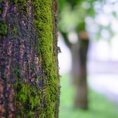 Nature (fpaulo2k1) Tags: beautyinnature closeup day focusonforeground green greencolor growing growth lush foliage nature nopeople outdoors plant scenics sky tranquil scene tranquility tree treetrunk