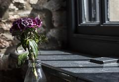 Hawkes House (Ingleberry2000) Tags: pink flowers blue flower green window water glass leaves aperture rocks shadows purple vase windowsill