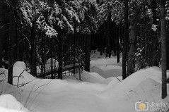 Magic path (grimaux.jordan) Tags: wood bw white snow black nature forest landscape place snowy path magic scape