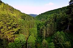 Green color of nature (Arcieri Saverio) Tags: green calabria italia woods nature landscape forest paesaggio sky nikon sigma sigma1020 1020mm 1020 d5100 sila