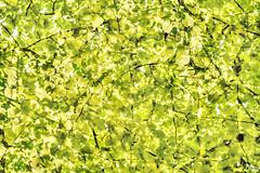 Multiple Nature 339 (pni) Tags: tree green suomi finland leaf helsinki branch surface multipleexposure helsingfors tlnlahti tripleexposure multiexposure skrubu pni tlviken pekkanikrus