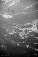 Descent (Ojo de Piedra) Tags: people misty mystery mexico blackwhite nikon couple rocks adventure ropes caving golondrinas mex sanluispotosi cavers sotano ropeaccess huastecapotosina caveshaft