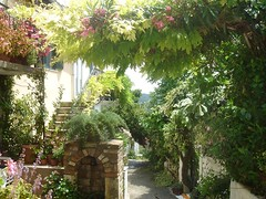 The path we share (Sibad) Tags: bougainvillea corfu wisteria anokorakiana democracystreet