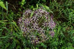 (kilian336) Tags: fleur terra botanica