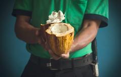 Cocoa (Un par de peras) Tags: cuba baracoacuba cacao cocoa baracoa chorote origendelchocolate naturaleza fruto guajiro campesino fruit lovingnature
