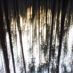 upside burned your turned me (AKfoto.fr) Tags: vert arbre tree forest syberia novosibirsk long exposure