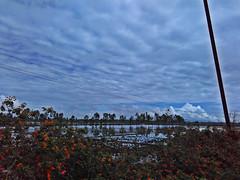 HMMM (Niki_Ta_1998) Tags: plants nature beauty clouds photography farming manipur northeastindia