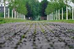 entrance - Einfahrt (Knarfs1) Tags: alley entrance weg einfahrt allee