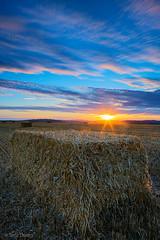 The Hunt (Tedz Duran) Tags: outdoor field landscape sunset sky serene tedzduran sussex england uk europe golden hour sun hays hay bales sunlight sunburst sony ilce 7r2 tse 24mm a7r2 roadtrip