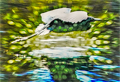 Gliding Egret (FotoGrazio) Tags: freetodownload composition nature water fotograzio magical digitalphotography animal capture phototopainting feathers waynegrazio bird photographicart photographersincalifornia abstract photoshoot freeimage bokeh dream artofphotography gliding phototoart botanical downloadforfree waterfowl flying dreaming fineart egret botany flickr texture sandiegophotographer worldphotographer painterly californiaphotographer wildlife beautiful photographersinsandiego explore art 500px internationalphotographers green waynesgrazio freepicture photography surreal filter forge