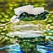 Gliding Egret