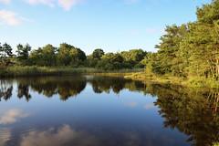 Lake at Upton Heath (arripay) Tags: upton heath dwt poole dorset lake reflection