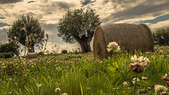 strawbales in the summer meadow (bocero1977) Tags: grass landscape flowers nature germany outdoor perspective clouds trees summer white strawbales meadow blue pov low roller sky green moody light colors field