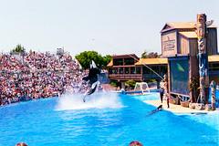 1998_03~008 (If you didn't film it, it didn't happen!) Tags: california animal aquarium outdoor photograph amusementpark 1998 orca seaworld sandiegocounty