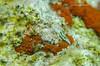 Elysia timida (Xavier Mas Ferrá) Tags: mar ibiza elysia timida nudibranquio fotosíntesis cloroplastos
