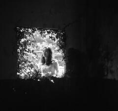 img365 (阿智) Tags: bw 120 film darkroom 黑白 fujiacros100 底片 暗房 沖片 rolleiflex35a