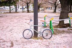 DS7_1780.jpg (d3_plus) Tags: street sky plant flower nature bicycle japan walking 50mm cycling spring nikon scenery bokeh outdoor fine daily bloom  cherryblossom  sakura streetphoto nikkor     dailyphoto   kawasaki  50mmf14 thesedays pottering     fineday    50mmf14d  nikkor50mmf14    afnikkor50mmf14  50mmf14s  d700  kanagawapref  nikond700 aiafnikkor50mmf14  nikonfxshowcase nikonaiafnikkor50mmf14