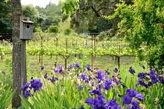 20140504_5924 (Tom Spaulding) Tags: california ca flowers vineyard winery napavalley sthelena tressabores sthelenaca tressaboreswinery