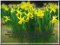 In des Vaters Hnde! / Father, into your hands! (Martin Volpert) Tags: flower fleur christ god faith flor pflanze lord bible blomma christianity blume bibbia fiore blte herr rettung blomst tod scripture virg scriptures lore biblia bloem gott blm iek floro kwiat flos karfreitag holyspirit ciuri bijbel kvet kukka cvijet flouer glauben christentum bibleverses blth jesuschristus cvet zieds is floare blome iedas bibelverskarte mavo43 lovetruth jesusstirbt