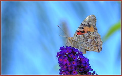 April Butterfly