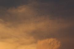 Kathmandu, Birds in the Storm (Jos Rambaud) Tags: nepal sunset storm rain birds clouds atardecer stormy nubes tormenta kathmandu cumulonimbus cumulonimbos