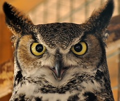 Owl Eyes by m.shattock, on Flickr