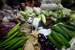 Flickr_Bangkok_Klong Toey_Markey-21-04-2015_IMG_9479 (Roberto Bombardieri) Tags: food thailand market tailandia mercato klong toey