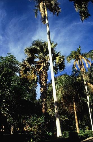 """Ägypten 1999 (063) Assuan: Botanischer Garten, Elnabatat's Island • <a style=""""font-size:0.8em;"""" href=""""http://www.flickr.com/photos/69570948@N04/26563556823/"""" target=""""_blank"""">View on Flickr</a>"""
