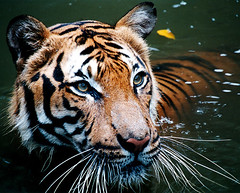 HD Images of the Wild Animals, Wallpapers and backgrounds - Part 8 (PhotographyPLUS) Tags: pictures graphics photos illustrations images stockphotos articles footage stockimage freephoto stockphotograph