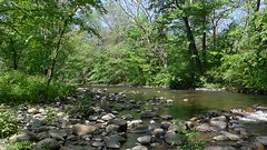 Sound of the Spring River !  except the secs of oops glitch at end (close or ignore :) ) - too lazy to edit ...  2016-05-19_103209 (Toby Garden) Tags: park new river video spring fishing jersey trout pequannock riverdale appelt