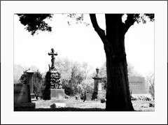 Cemetery Stones (MEaves) Tags: blackandwhite bw tree monochrome cemetery graveyard stones makers