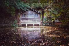The Boathouse (koaysusan) Tags: autumn trees leaves gardens reflections boathouse quaint dandenongs dandenongranges alfrednicholasgardens