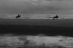 Gallop (john_s_eddie) Tags: gallop sand sky sea beach horse